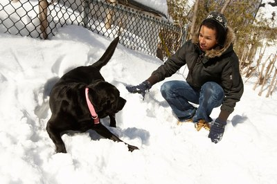 Your dog may love to frolic in the snow, but make sure to limit his exposure to dangerously cold temperatures.