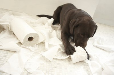 Left unsupervised, a puppy's curiosity can lead to destructive behavior.