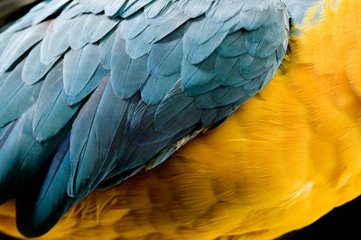 The state of your bird's feathers tell you a lot about his health.