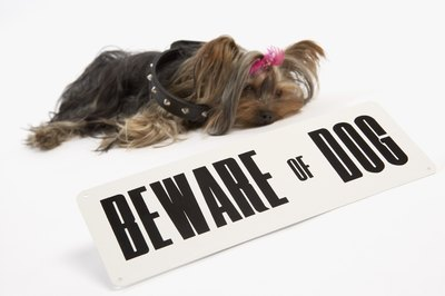 Your Yorkie's coat can make her hot during the warmer parts of the year.