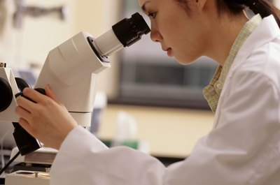 Laboratory technicians work with microscopes to spot abnormalities in blood samples.