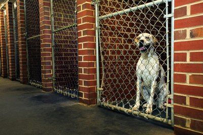 Indoor kennels keep your pups warm and dry.