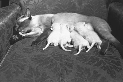 A new mother cat will be focused entirely on her kittens.