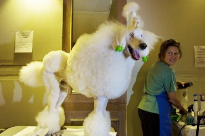 Grooming can be a work of art.
