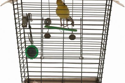 Canaries make colorful additions to any household.