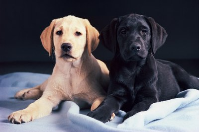 A puppy's weight increases rapidly in the first months of life.