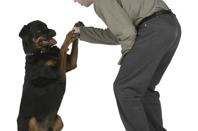 Compromise with your Rottweiler to make life easier.