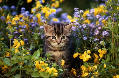 Though adorable, that little kitty could damage your plants.