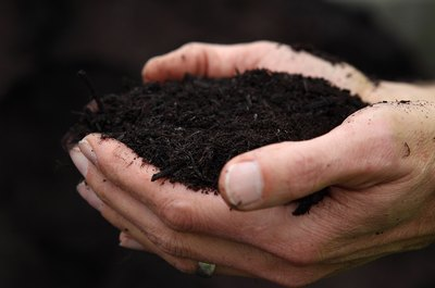 Compost from yard waste adds nitrogen to the soil but little phosphorus.