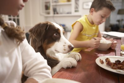 Make your dog feel like one of the family with these all-natural dog food recipes.
