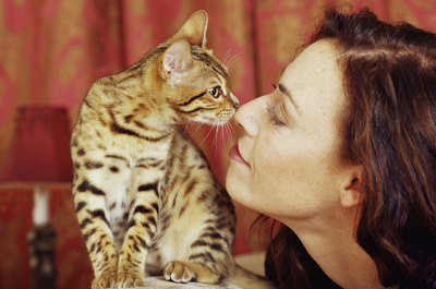 Your cat may touch your nose in greeting, just as he does with other cats. It's only polite you return the favor.