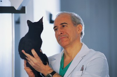 Gastric reflux can occur in cats of any age.