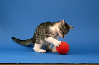 Redirecting your kitten with appropriate toys can save his littermate's neck.