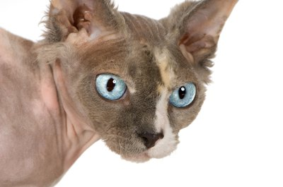The pet store claimed the hairless cat would be hypoallergenic, but you found out otherwise.