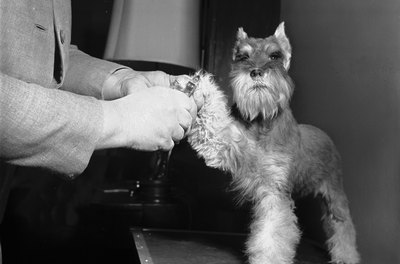 Dogs are often calmer when a vet or groomer clips their nails.