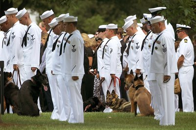 Military dogs work side by side with servicemen and women.