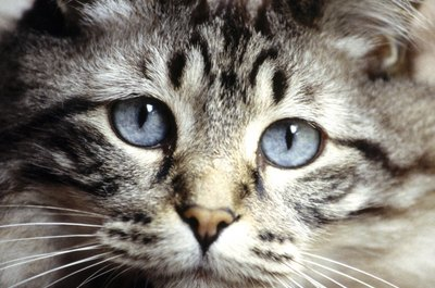 Many commercial cat foods are too high in carbs to be healthy.