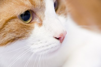 Cold sores around your kitty's eyes and mouth indicate a virus at work.