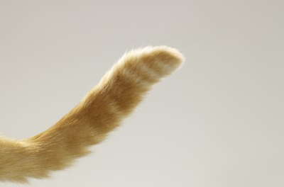Acquaint yourself with your cat's tail behaviors.