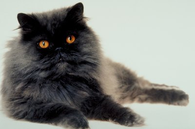 Over-grooming is a common cause of annoying hairballs.