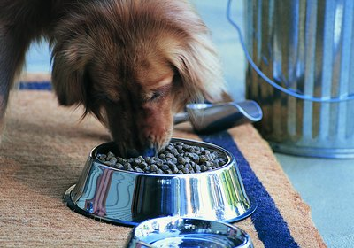 What Happens if I Feed My Dog Too Much Fiber?