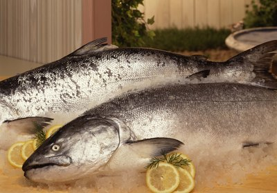 Giving Salmon or Tuna to Dogs