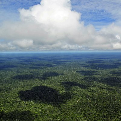 Average Temperature of the Amazon Rainforest | USA Today