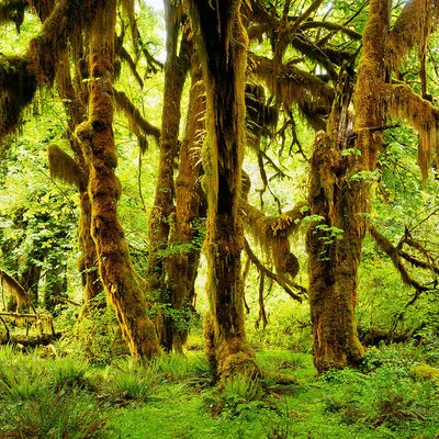 Exploring The Hoh Rain Forest In Washington Usa Today