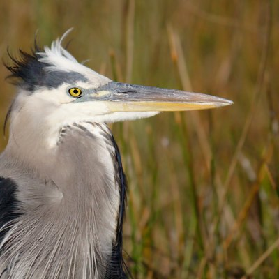 Airboat Tours In Everglades National Park Usa Today