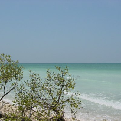 This Photograph Was Taken At Honeymoon Island State Park Which Is Located In Northwestern Pinellas County Near Clearwater Fl