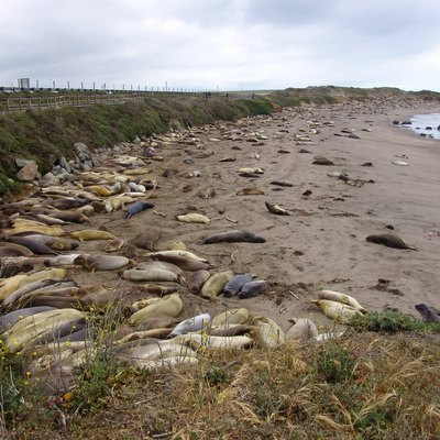 the best time to visit the elephant seals in san simeon ca usa