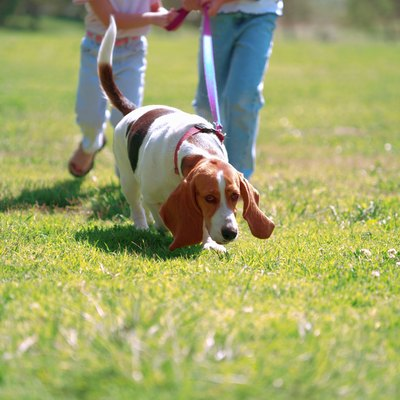 Dogs have many behaviors that are unusual to people, including walking in circles.