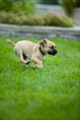 Can You Spray Roundup Around Dogs