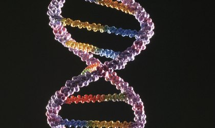 3D DNA Pipe Cleaner Project