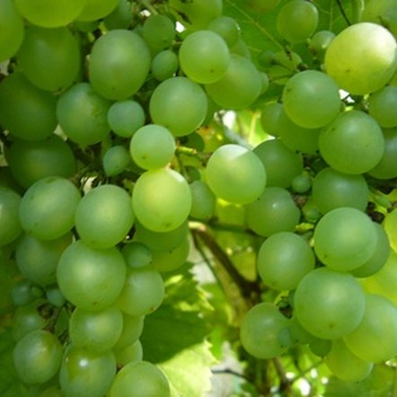 Grapes and apples are rich in insoluble fiber. A high-fiber diet lowers blood sugar levels.