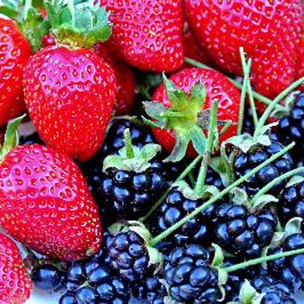 Berries are rich in key vitamins and minerals.