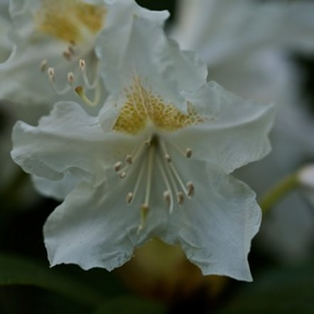 Jasmine is known for its delicious fragrance.