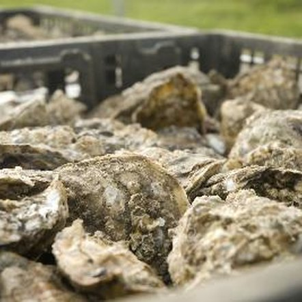 Oysters are a good example of iron-rich seafood.