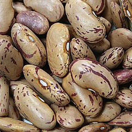 Pinto beans are usually the basis for refried beans.