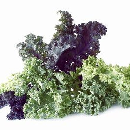 Kale is higher in fiber than lettuce.