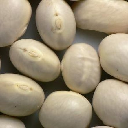 Navy beans are an excellent source of dietary fiber.