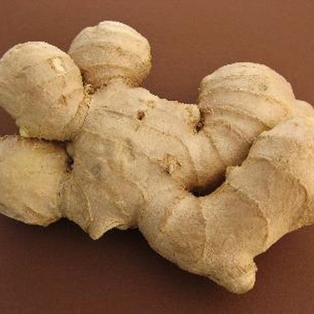 "Fresh ginger root is sold with several protrusions that are called ""knobs""."