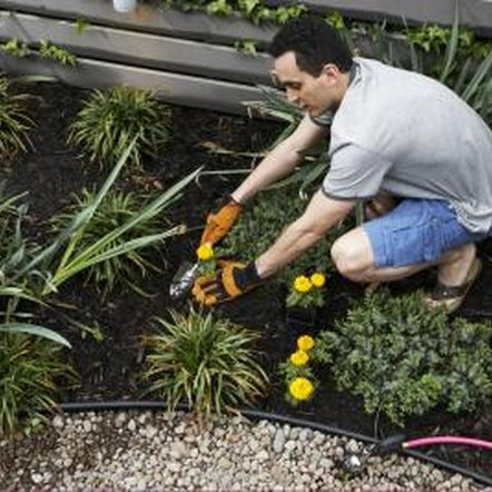 Use finished compost as a mulch around your plants to minimize weeding and increase organic matter in the soil.