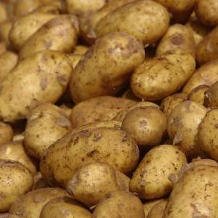 Depending on the cultivar, potatoes are hardy to U.S. Department of Agricultural zone 3.