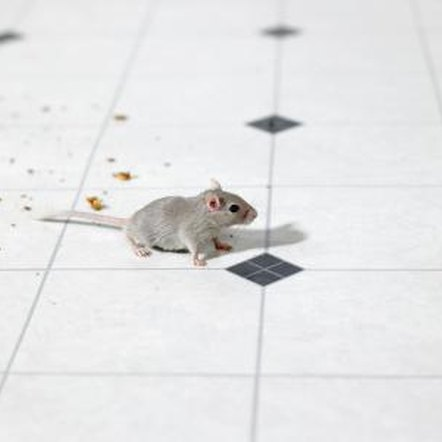 Mice can't tolerate electronic sonic repellents, but humans can't hear the high-frequency sounds.
