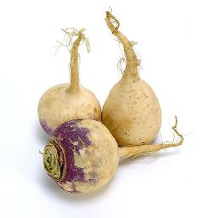 For flavor and tenderness, harvest turnips when they are small.
