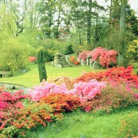 Plant a large group of Encore azaleas for a dramatic look.