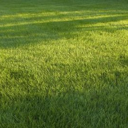 Fertilizer with atrazine provides a weed and feed program for St. Augustine grass.