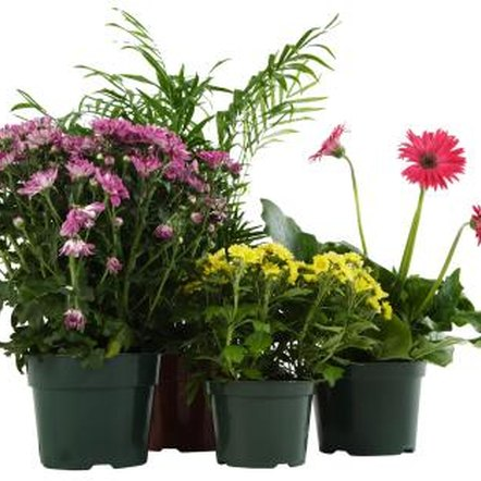 Recreating an outdoor environment indoors helps ensure vigorous growth.