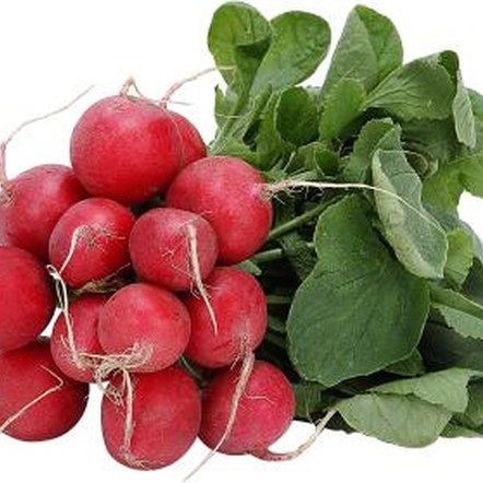Spring radishes are harvested when they are small and tender.